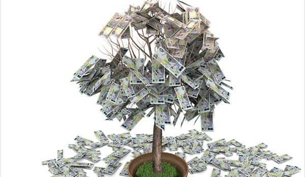 UAE dirham money tree