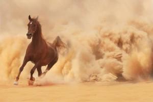 حصان يركض